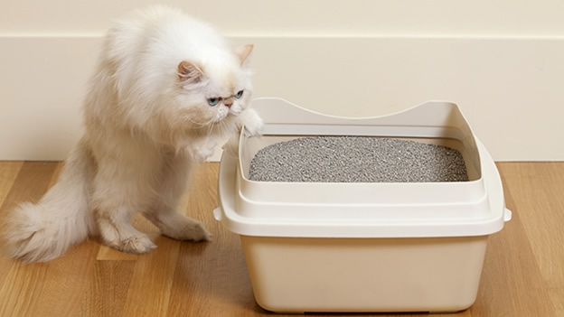 Foto ¿Por qué mi gato no usa la caja de arena?