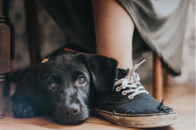 Foto Mi perro tiene un soplo cardíaco ¿debo preocuparme?