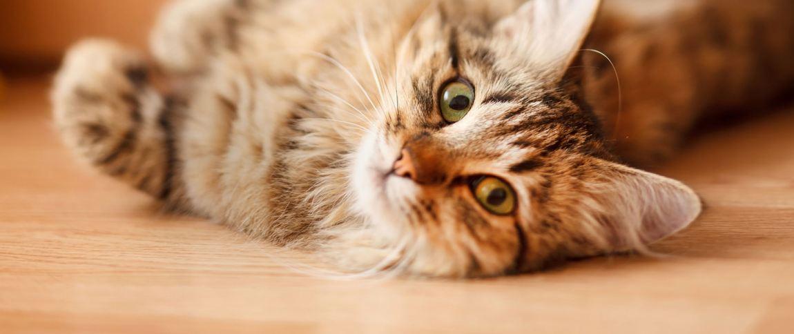 Consejos gatunos para la visita al veterinario